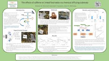 Caffeine on Stream Food Webs Via Chemical Diffusing Substrata